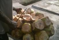 Ayesha Casely-Hayford blog